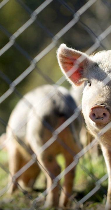 Adelaide Hills Farm Services